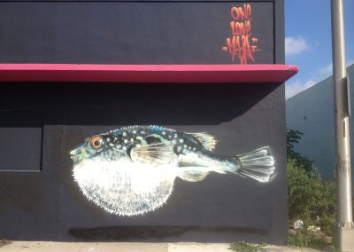 Pufferfish, Miami