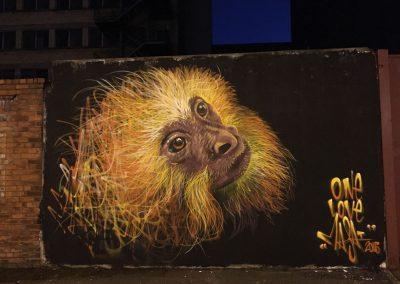 Golden Lion Monkey, Belfast
