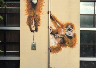 Orangutan, Italy