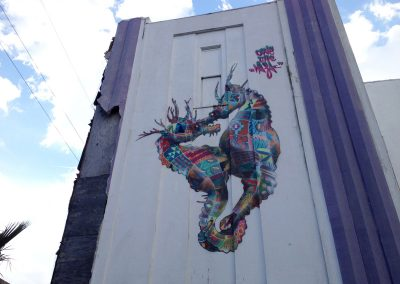 Seahorses, New Orleans